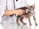 La santé de votre chat