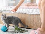 Les activités de votre chat