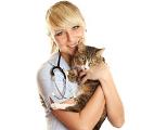 Vous aimez votre chat ? Assurez sa santé !