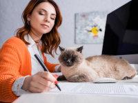 Aspects pratiques de l'adoption d'un chat