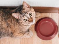 Alimentation du chat