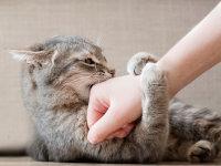 Comportement & Éducation du chat