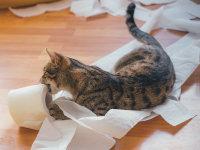 Les problèmes comportementaux du chat