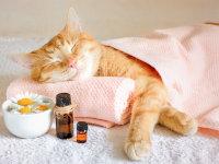 Les médecines & soins naturels pour chat