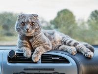 Assurances pour chat